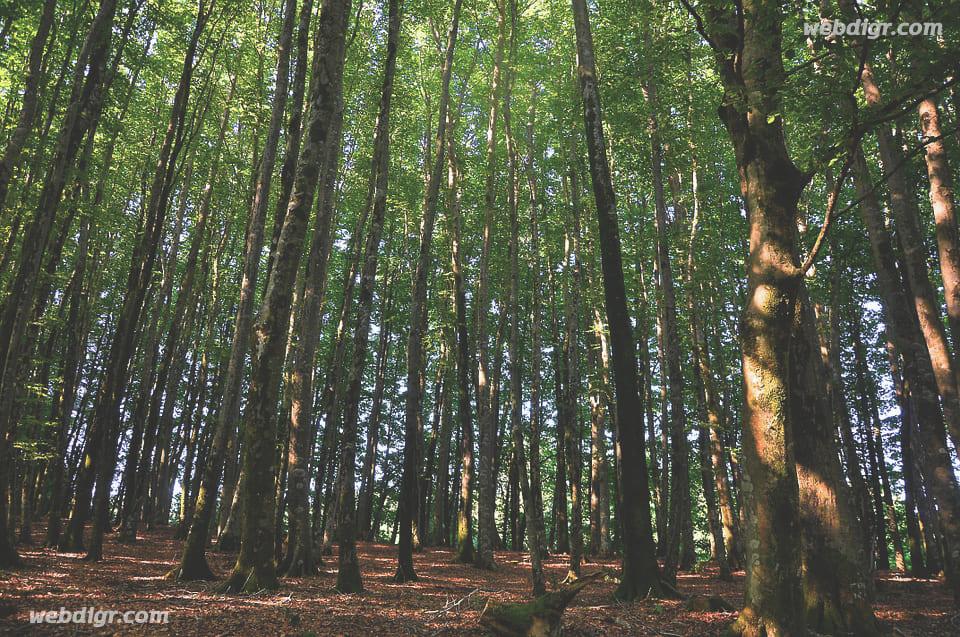 1 2 - การเปลี่ยนแปลงภูมิอากาศ ของพื้นป่า