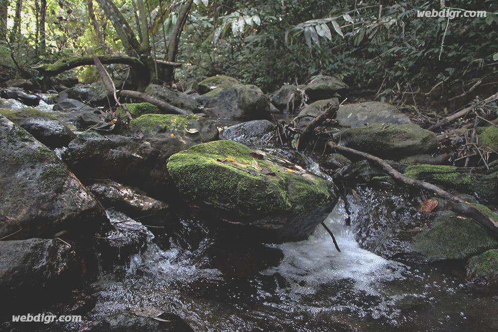 1 6 - การเปลี่ยนแปลงภูมิอากาศ ของพื้นป่า