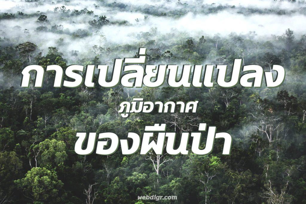 1 8 1 1024x683 - การเปลี่ยนแปลงภูมิอากาศ ของพื้นป่า