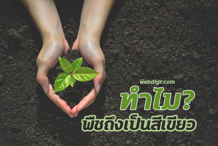 2 - ทำไมพืชถึงเป็นสีเขียว