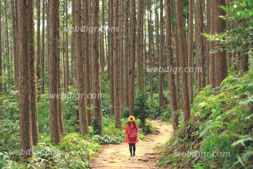 unnamed - กลยุทธ์การปลูกต้นไม้ของอังกฤษ