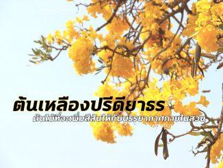 ต้นเหลืองปรีดียาธร