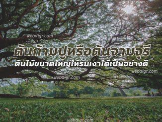 ต้นก้ามปูหรือต้นจามจุรี