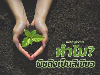 2 1 326x245 - ทำไมพืชถึงเป็นสีเขียว