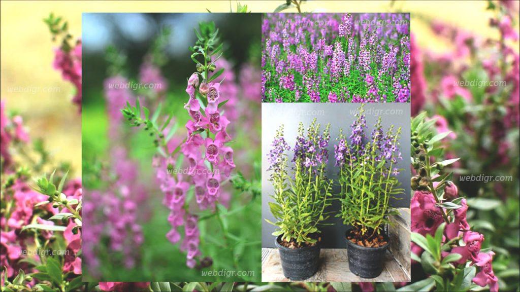 4 1024x576 - ต้นแวววิเชียร พันธุ์ไม้ดอกที่รู้จักกันในชื่อดอก Forget Me Not เมืองไทย