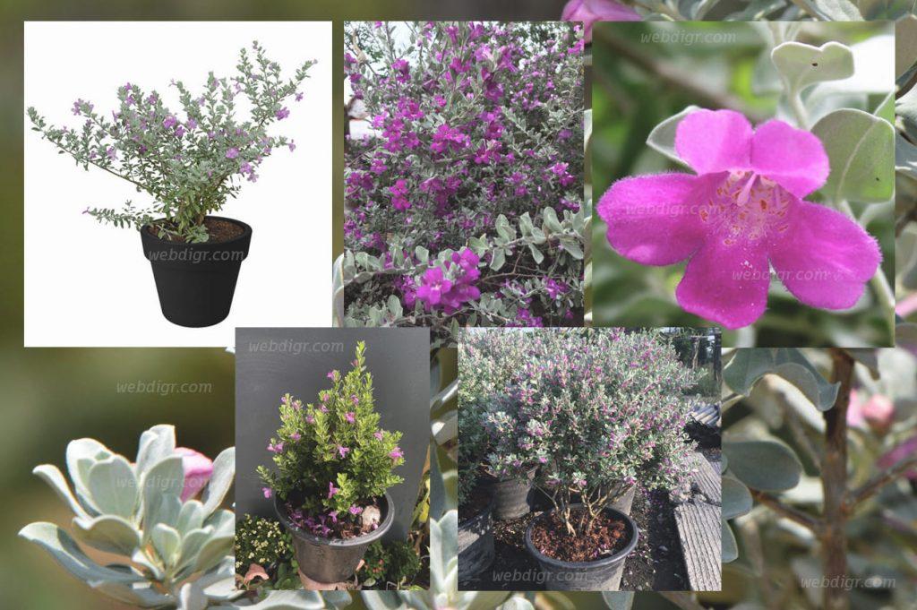 5 1024x681 - ต้นนีออน ต้นไม้ลักษณะทรงพุ่ม ที่เรียกได้ว่า เป็นพันธุ์ไม้ดอกไม้ประดับ