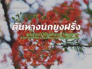 ต้นหางนกยูงฝรั่ง2 326x245 - ต้นหางนกยูงฝรั่ง ต้นไม้ที่มีความสวยงาม นิยมนำมาเพาะปลูกตามบริเวณบ้าน